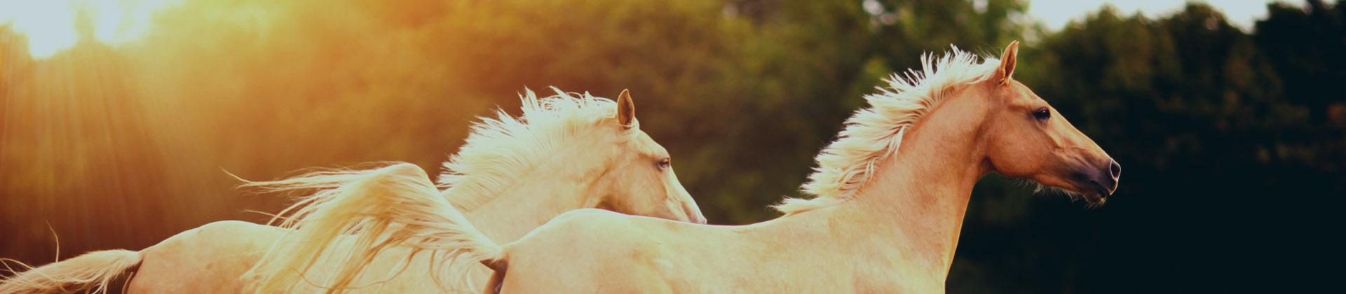 Takarmánykiegészítő megoldásokat kínálunk a lovak egyedi igényei szerint.